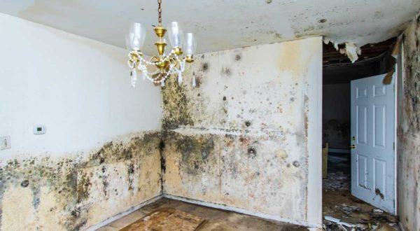 Water Damage Cleaning